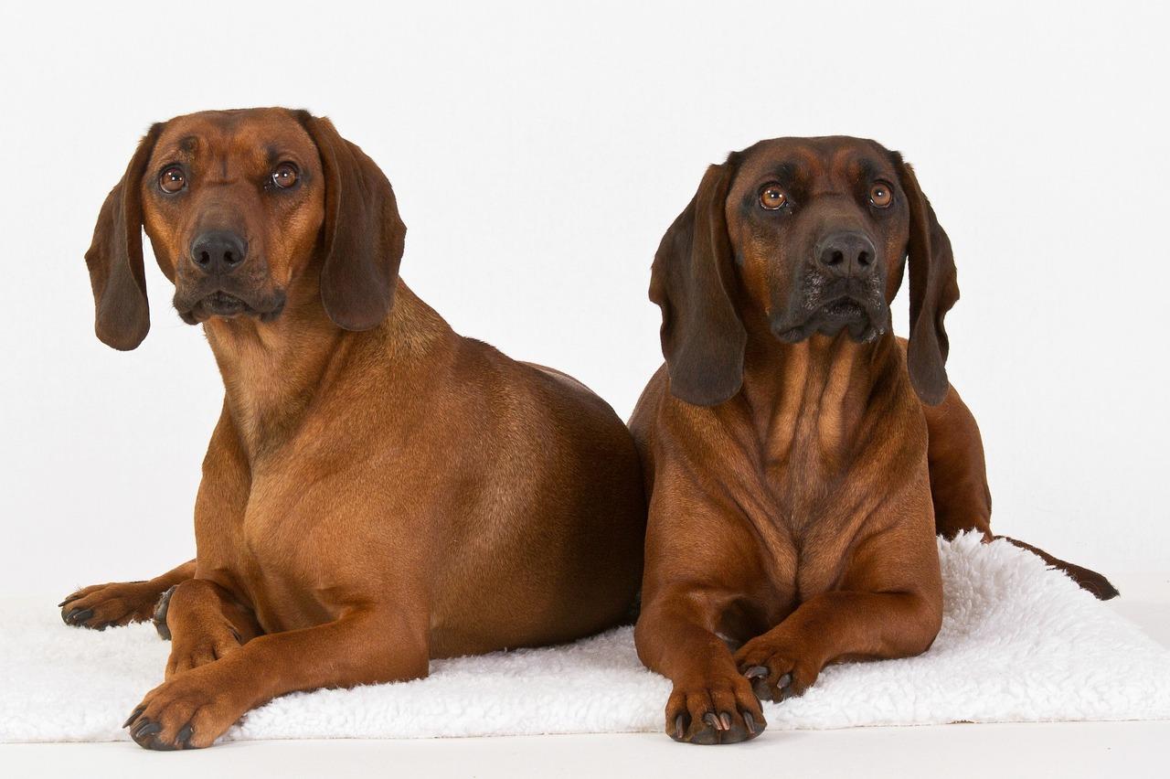 Jak sprawić, aby pies nie ciągnął nas na smyczy?