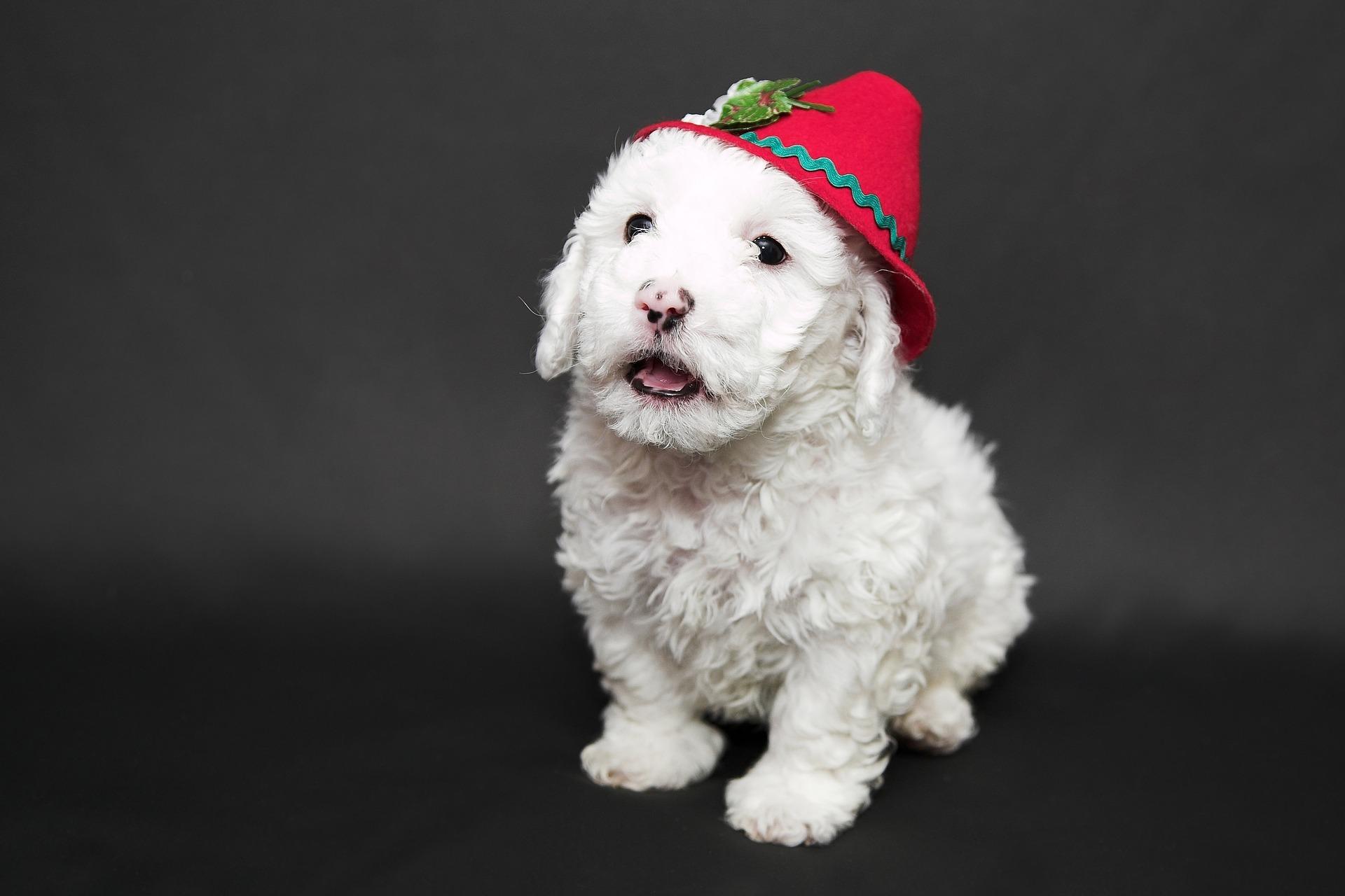 Jak karać psa bez wyrzutów sumienia?